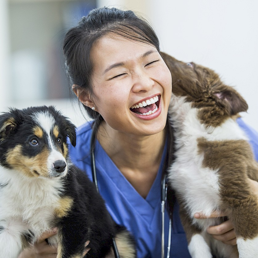 woman veterinarian holding two puppies